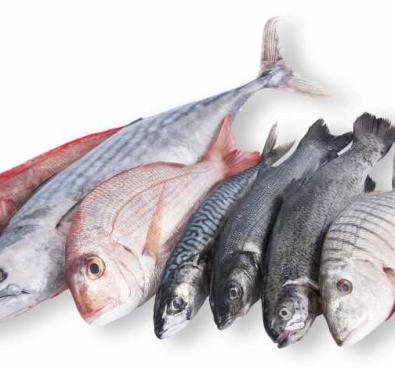Свежемороженная рыба оптом в России