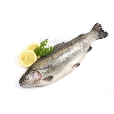 trout-9